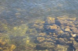Pondcloseup