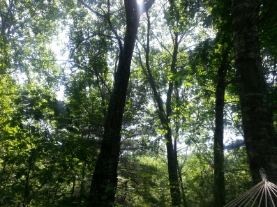 The trees at Nixie's Vale